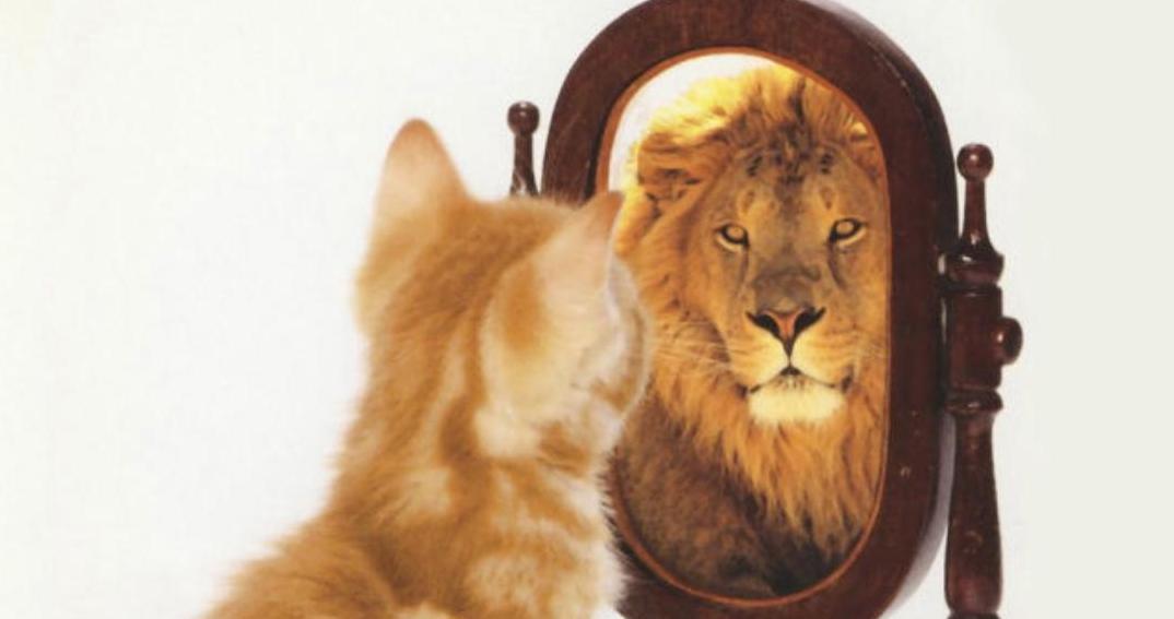 A Síndrome de Dunning-Kruger